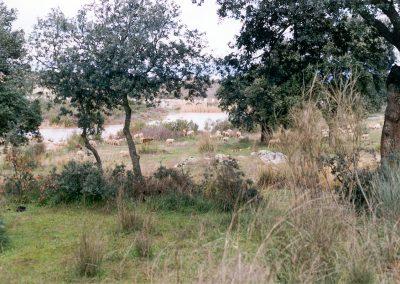 Paraje del rio Guadamatilla